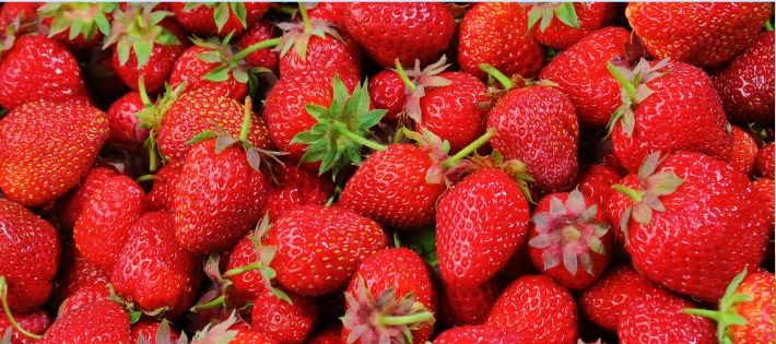 6 Easy to Grow Fruits and Vegetables in Edinburgh